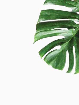 """רקע לצילום ציפורניים """"Leaf"""""""